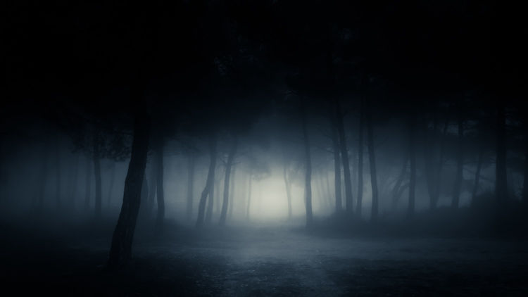 A dark, foggy forest at night, with an eerie light at the end of a dirt path