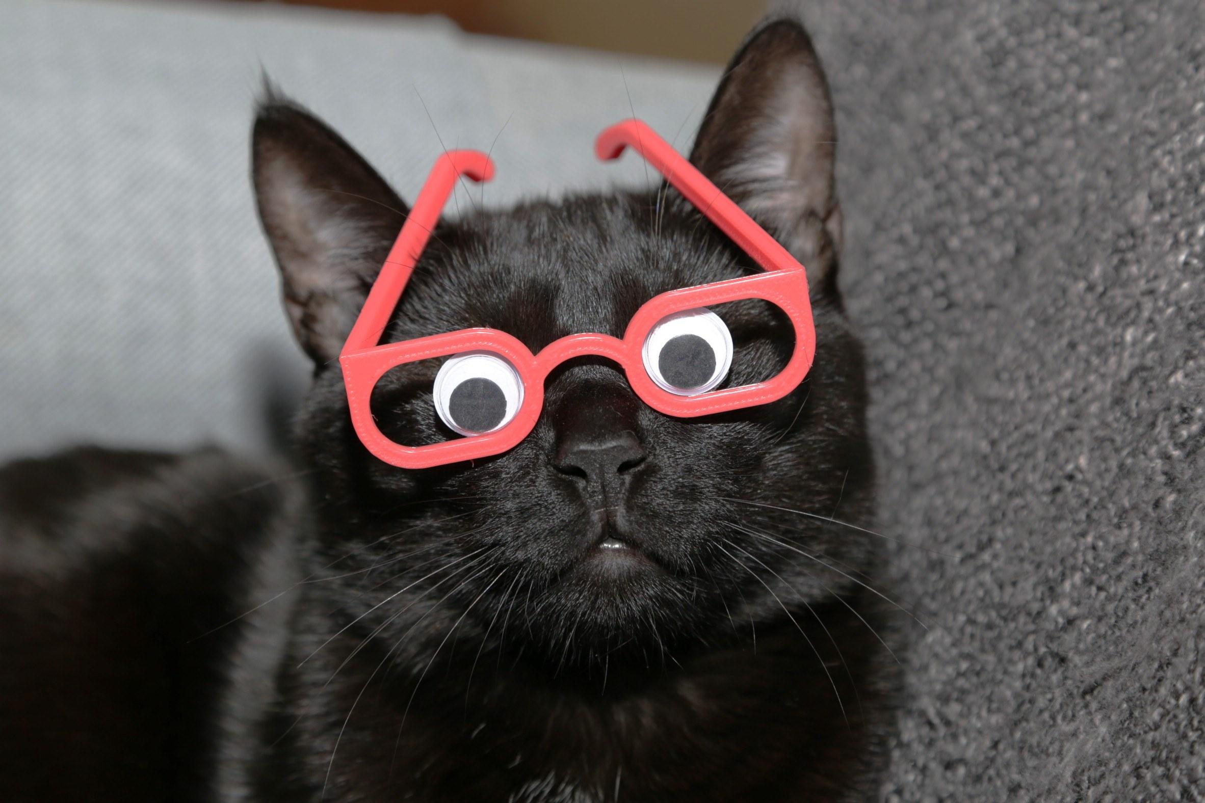 Cat Win Glasses
